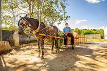 Carroceiro Usa Máscara De Proteção Contra Covid 19 Em Guarani, Minas Gerais, Brasil