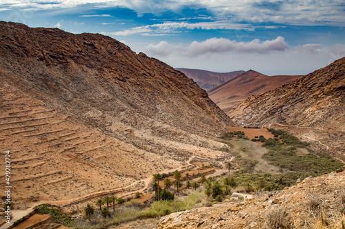 Widok na góry i oazę palmową - fototapety na wymiar