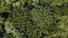 Aerial View Of Araucarian Forest, Curitiba, Paraná. Brazil