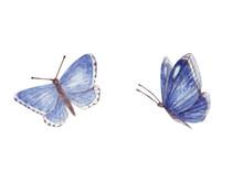 Blue Butterflies In Watercolor