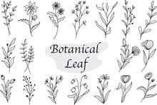 Set Of Botanical Leaf Doodle Wildflower Line Art