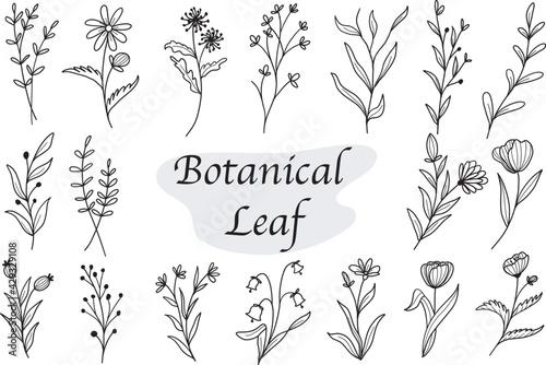 Photo set of botanical leaf doodle wildflower line art