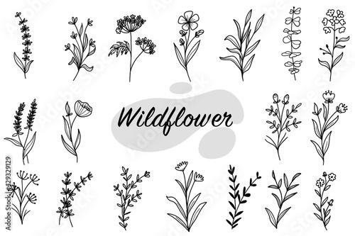 set of botanical leaf doodle wildflower line art Wallpaper Mural