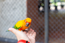 A Trip In The Zoo, Feeding The Parrot In The Large Cage. The Parrot Came To Eat The Sunflower Seeds In Hand.