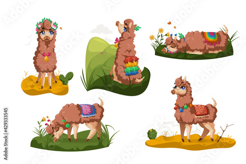 Fototapeta premium Llama, Peru alpaca animal, cartoon Mexican Lama character, mascot with cute face wear tassels on ears and blanket different poses sitting, sleeping, grazing on grass, stand on desert sand isolated set