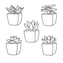 Line Style Succulent Plant Pots Vector Icon Assorted Set