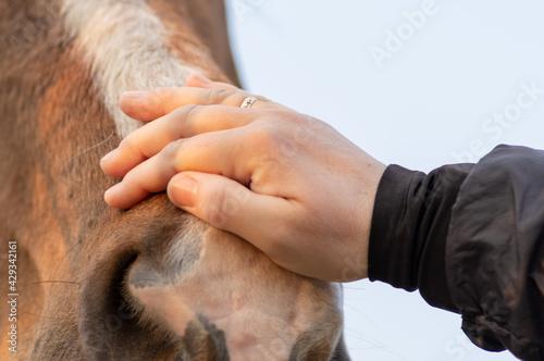 zbliżenie na dłoń głaszczącą konia #429342161