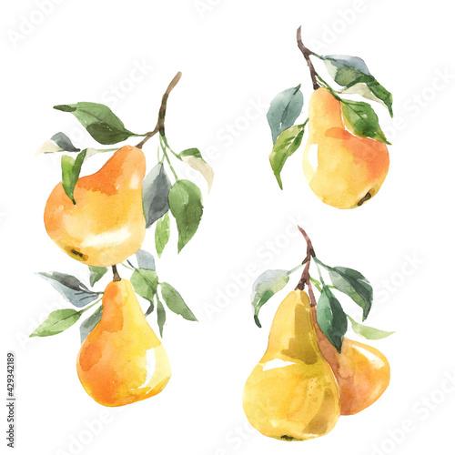 Beautiful set with hand drawn watercolor tasty summer pear fruits Fototapeta