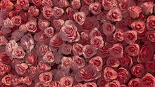 Beautiful, Romantic Wall Background With Roses. Vibrant, Floral Wallpaper With Colorful, Pink Flowers. 3D Render