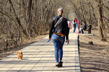 Girl In Jeans Walking A Little Dog In A Spring Park