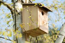 Starennistkasten Aus Holz Mit Einflugloch Und Dachüberstand, Hängt An Birkenbaum Im Frühjahr.