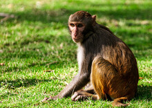 Portrait Of A Monkey In The Park