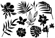 Vector Tropic Leaves And Flower Silhouette. Jungle Plant, Monstera Leaf, Palm Frond, Exotic Floral. Abstract Set