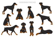 Doberman Pinscher Dogs Clipart. Different Poses, Coat Colors Set