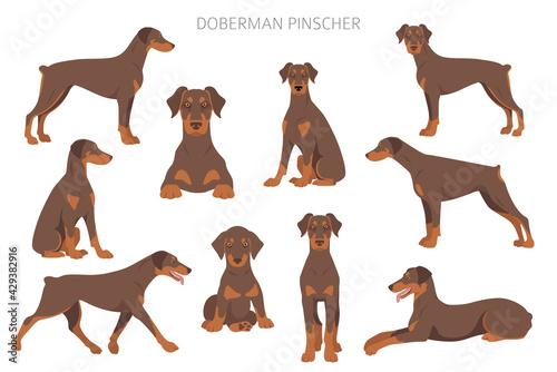 Canvas Doberman pinscher dogs clipart. Different poses, coat colors set