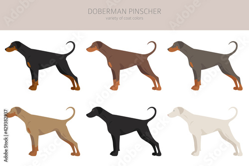 Fényképezés Doberman pinscher dogs clipart. Different poses, coat colors set