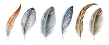 Feather Watercolor Illustration Set. Bird Quill And Down Hand Drawn Realistic Collection. Grey And Brown Bird Feathers With White Dots. Various Feathering Natural Image Set