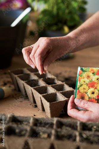 Obraz na plátně Close up of hand sows flower seeds