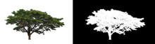 Tree Isolated On White Background With Clipping Path And Alpha Channel
