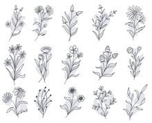 Set Of Botanical Floral Doodle Wildflower Line Art