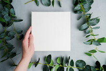 Female Hand Holding Blank Canvas Frame, Green Plant Branches On Background. Wrapped White Canvas For Mockup Poster. Spring, Summer Concept. Copy Space. Top View.