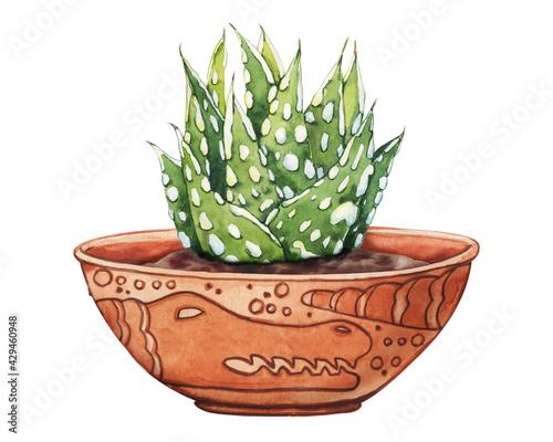 Fényképezés Pink succulent plant, greenery cactus, tropical plants with dew drops in a ceramic ethnic pot