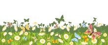 Blooming Meadow Close Up. Dense Grass, Chamomile And Butterflies. Isolated On White Background. Seamless Background Illustration. Summer Landscape With Wildflowers. Vector