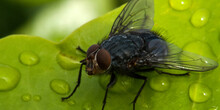 Fly On A Wet Leaf, Cannes