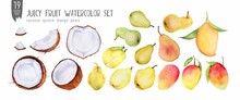 Fresh Coconut, Quince, Mangoes And Pears Watercolor Set, Halves, Slices, Bites. Handdrawn Tropical Fruits. Isolation On White Watercolor Set.