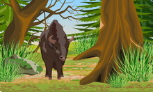 European Bison Bison Bonasus Stands At The Edge Of An Old Grove With Large Trees, Firs, Rocks And Green Grass. European Wood Bison. The Wisent Or The Zubr. Realistic Vector Summer Landscape.