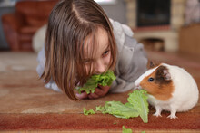 Girl Feeds Pet Guinea Pig With Green Salad