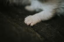 Closeup Shot Of The Paw Of A Cute Kitten