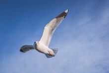 Seagull In The Sky On Beach