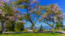 Sitting On Park Bench In Shade Of Cherry Blossoms While Enjoying Panoramic View Down Valley To Distant Ocean