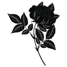 Branch Of Blooming Rose Flower. Rosebud Blossom Bough. Black And White Silhouette.