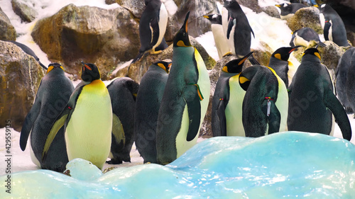 Fotografie, Obraz Wonderful Penguins in the Wild, Birds, Wild Animal, Wildlife, Wild Nature