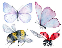 Watercolor Insects Blue And Pink Butterflies, Bumble Bee And Flying Ladybug Isolated On The White Background.