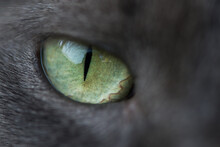 Macro Picture Of Green Cat Eye Close Up