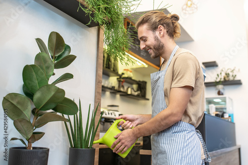 Fototapeta Smiling man in profile watering plants in cafe