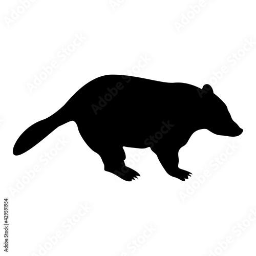 Photo Silhouette badger animal wild meles taxus predatory mammal family kunihih carniv