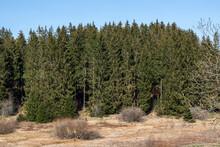 Vue Sur La Forêt Dans Les Hautes Fagnes