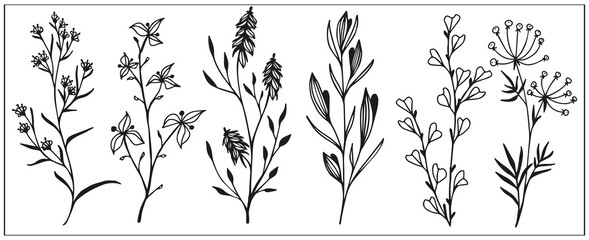 set of simple herbs, wildflowers and leaves, branches with berries, black and white linear drawing of botanical elements, meadow plants, stylized vector graphics