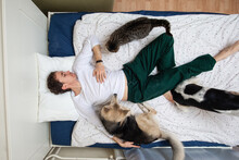 Man Dogs And Cat Lying On Bed With Blue Sheet