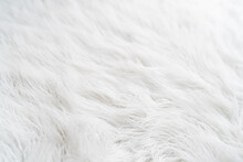 Textured White Background With Hairy Fur Carpet, Close-up