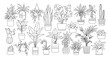 Houseplants. Vector set of outline drawings plants, succulents in pot. Indoor exotic flowers with stems and leaves. Monstera, ficus, pothos, yucca, dracaena, cacti, snake plant for home and interior