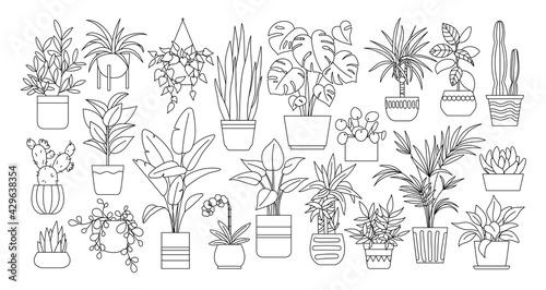 Photo Houseplants