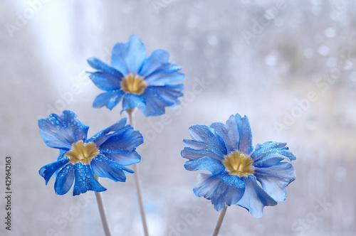 Obraz Kwiaty Porcelanki (Nemophila menziesii) - fototapety do salonu