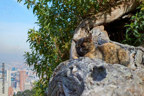 Fototapeta premium brown cat in viewpoint of Bogota
