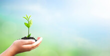 World Environment Day Concept: Hand Holding Tree Over Blurred Natural Background