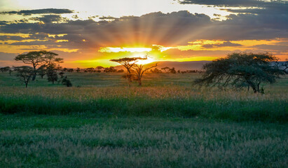 African sunset showing sun rays